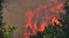 Φωτιά σε δασική έκταση στη Μόλα Καλύβα Χαλκιδικής